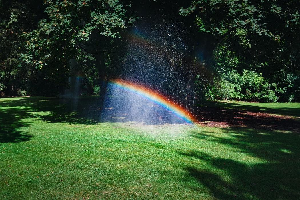rainbow in trees